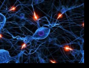 behavioral addiction brain
