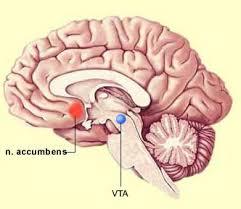 brain in love, love addiction treatment, Boulder, CO